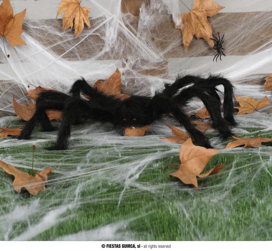 Włochaty pająk / 60 cm
